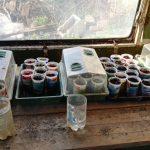Chili- und Paprikapflanzerl
